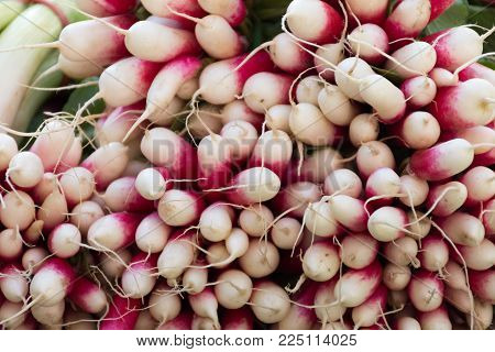 Close Up Of A Bunch Of White And Dark Pink Or Fuchsia French Breakfast Radishes Photographed At Eye
