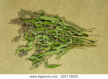 Sage, salvia. Dry herbs for use in alternative medicine, phytotherapy, spa, herbal cosmetics. Preparing infusions, decoctions, tinctures. Used in powders, ointments, butter, tea, bath
