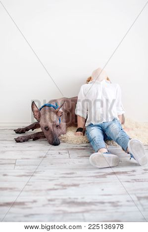 Red-haired child and Mexican Hairless Dog with copyspace