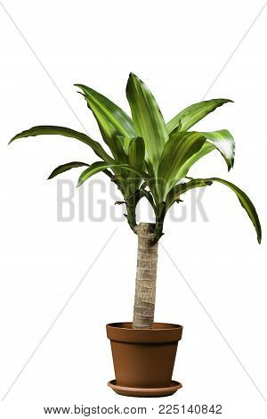 Palm tree in a pot. Light pot brown color. On a white background