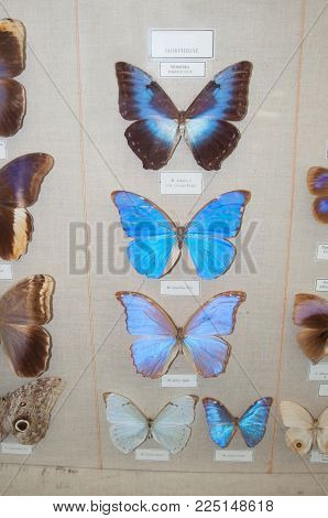 several butterfly of the same genus at the exhibition