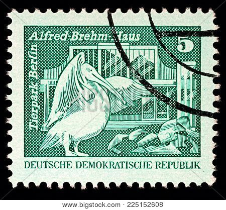 Moscow, Russia - February 05, 2018: A stamp printed in GDR (East Germany), shows the great white pelican (Pelecanus onocrotalus) in Berlin Zoo, Alfred-Brehm-Building, series