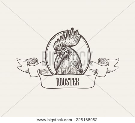 Head of rooster or cock inside round frame decorated with ribbon hand drawn in vintage engraving or woodcut style. Domestic fowl, poultry farm bird. Vector illustration for label, advertisement.