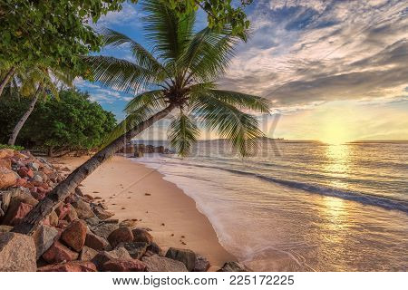 Tropical beach with palm tree on Paradise island in the turquoise sea at sunset.