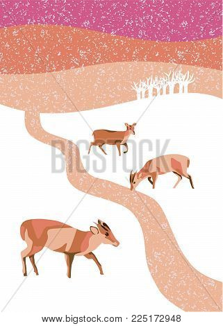 Winter scene of three Muntjac deer at sunset