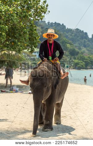 Koh Chang, Thailand - March 12, 2017: Domesticated baby elephant in Koh Chang. Thailands population of domesticated elephants is about 2700 and many are used in the tourist industr