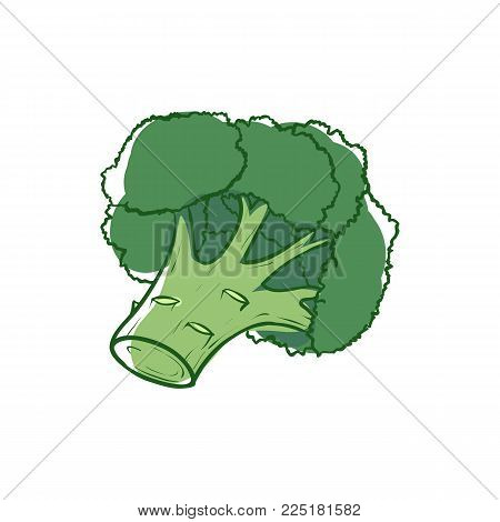 Ripe Broccoli Sprouts Icon Isolated On White Background. Natural Vegetable, Healthy Vegan Nutrition,