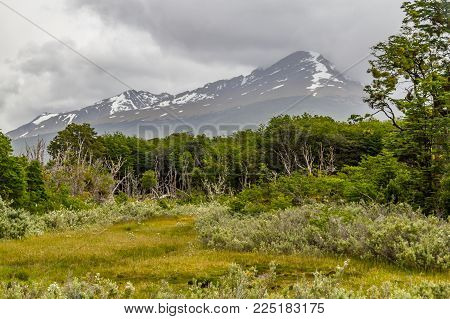 Trail, Forest And Lapataia Bay,tierra Del Fuego National Park