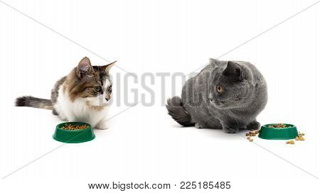 cats eat dry food on a white background. horizontal photo.