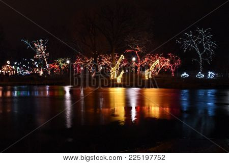 Giraffes and illuminated trees reflections on pond, Lincoln Park Zoo Lights, Chicago, IL December 13th, 2017