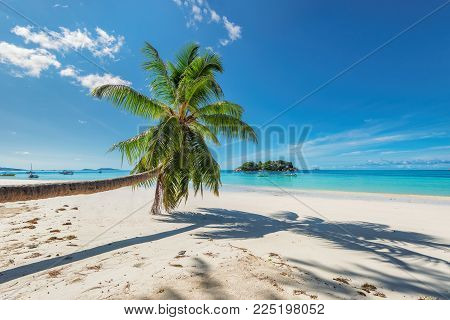 Sandy beach with palm trees on Paradise island in the turquoise sea.