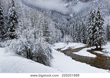 Snow on the trees of a French Alps forest