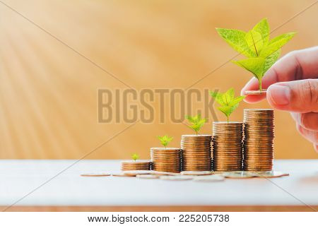 Investor hold coin with plant growing on the top and stack with savings money put in the office, Turnover of business investment and saving growth concept.