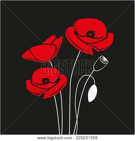 Red Poppy flower isolated on black background. Vector red romantic poppy flowers and grass. red poppies. vector illustration. red flower.
