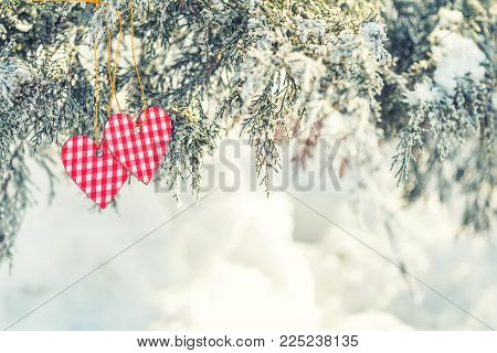 Beautiful Valentine Holiday Background With Two Checkered Hearts On Thuja Cypress Tree Branches Cove