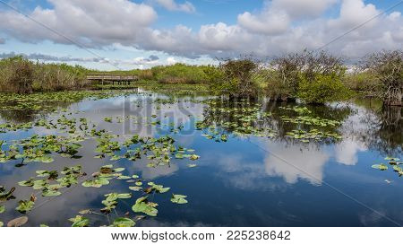 Lake and boardwalk in the wetlands of Everglades National Park, Florida