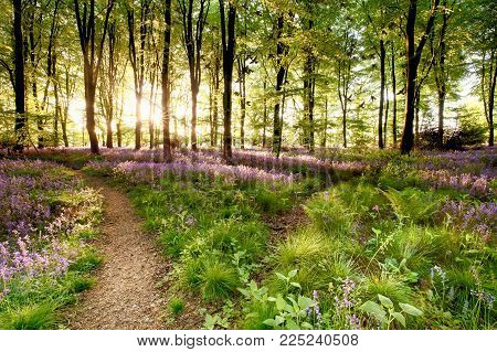 Bluebell Woods With Birds Flocking Through The Trees Duing Early Morning Sunrise. Magical Forest Wit