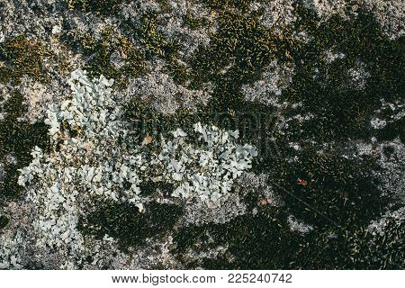 Moss texture. Mossy stone background. Green moss on the stone. Organic texture and background for design. Closeup view of green moss.