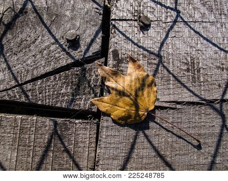 An autumn leaf fallen on the planks of an old wire bridge with the shadow of the wire-netting on them
