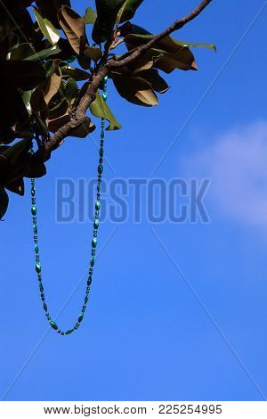 A shiny green necklace dangles in a tree. Set against a blue sky, the sunlit beads symbolize the festivity of a Mardi Gras celebration.