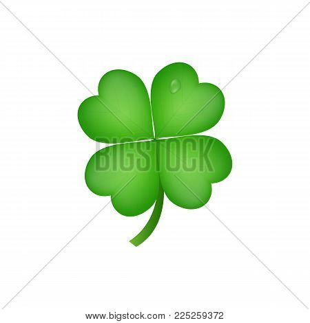 Clover. Realistic four leaf clover for Saint Patrick's Day.