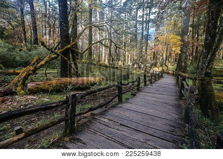 Footpath in the wild Yulong park in the forest at autumn time in the China  near Lijiang city