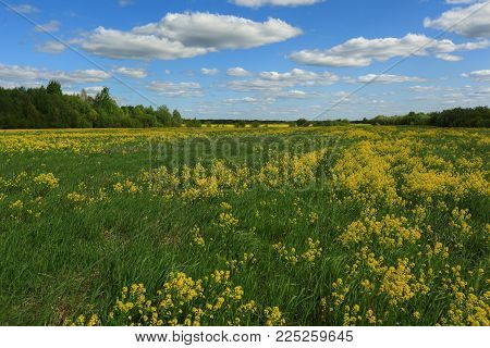 yellow flowers of a winter cress against the background of the blue sky with clouds