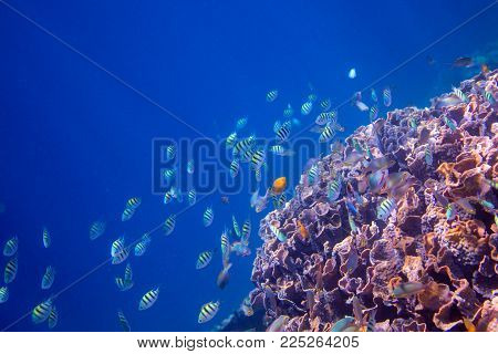 Underwater landscape of tropical seashore. Coral reef wall in open sea water. Coral reef underwater photo. Snorkeling or diving banner template. Seaside summer vacation activity. Aquarium background