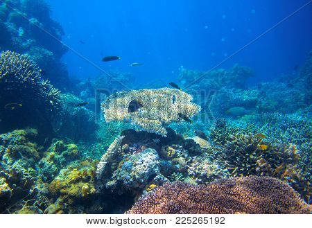 Tropical lagoon Underwater landscape. Coral reef panorama in open sea water. Coral reef underwater photo. Snorkeling or diving banner template. Seaside summer vacation activity. Seashore background