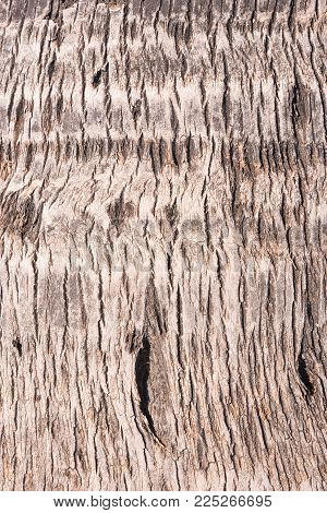 Closeup of a palm trees bark, detailed structure for background purposes
