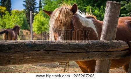 A young horse watching to the camera in a ranch