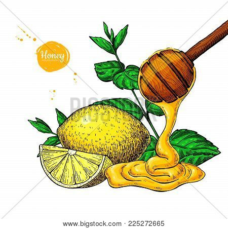 Honey with lemon and mint vector drawing. Wooden spoon, honey drop, hearb leaf and fruit slice.  Hand drawn illustration with tea ingredient, alternative medicine. Label, icon, packaging design.