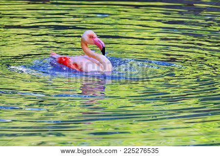 pink flamingo bathing in colorful water , beauty in nature