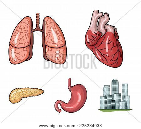 Heart, lungs, stomach, pancreas. Human organs set collection icons in cartoon style vector symbol stock illustration .