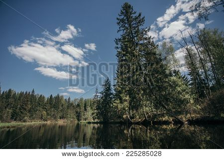 Fri-trees  forest with river at the spring time in the east europe