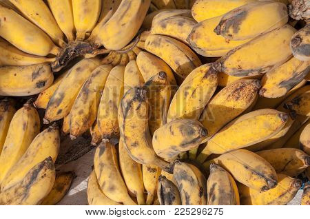 "poster of Pisang Awak banana yellow ripe market  background, Musa ABB CV. Kluai ""Namwa"""