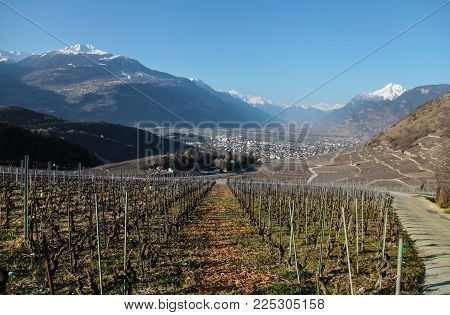 Spring In Switzerland. Vineyard And Mountains. Horizontal Shot.