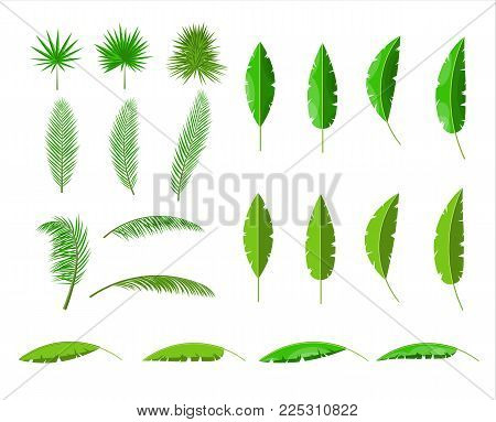 Tropical green leaves. Jungle leaves set. Coconut palm, monstera, fan palm, rhapis, banana tree. Natural leaf, exotic branches tree. Vector illustration in flat style