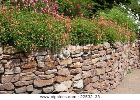 Ornamental Garden With Wall And Mimulus Aurantiacus