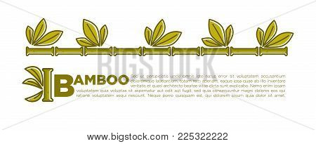 Bamboo leaf banner or poster background for SPA center or relax and beauty salon. Vector tropical palm or bamboo sprouts with green leaf for Zen or Asian and botany design template
