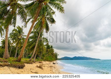 Coconut palm tree lined tropical shoreline as wet season clouds gather.