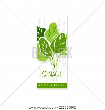 Creative hand drawn label with green leaves of spinach. Healthy vegetarian drink. Vegetable beverage. Graphic design for juice packaging. Hand drawn vector illustration isolated on white background.