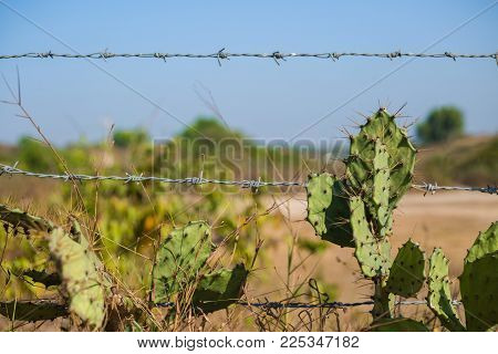 a old rustic barb wire fence next to a desert cactus. this fence represents control and force with metal and limits. The desert countryside is necessary to have barb wire to keep off your property.