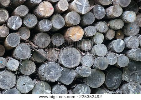 After Cutting, The Logs Are Stacked, That Is, Placed In Piles, In An Open Space Of The Sawmill By A