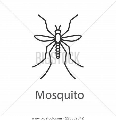 Mosquito linear icon. Insect. Midge, gnat. Thin line illustration. Contour symbol. Vector isolated outline drawing