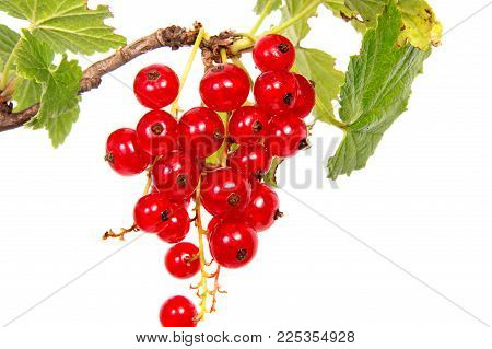 Close Up View Of Red Currant Berry Isolated On White Background. A Bunch Of Red Currant With Small G