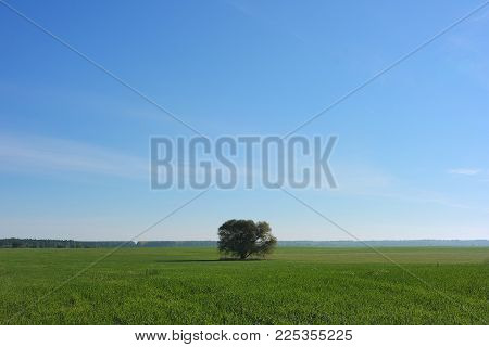 Agricultural Field. Summer Green Field And The Lonely Tree.
