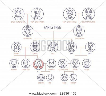 Family tree, pedigree or ancestry chart template with men's and women's portraits in round frames. Representation of links between relatives and their ancestors. Vector illustration in line art style