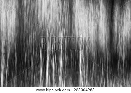 Abstract black forest on whithe fog panning technique. Abstract B&W blurred wallpaper concept.