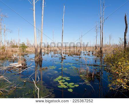 View of the Okefenokee Swamp of southern Georgia, USA.